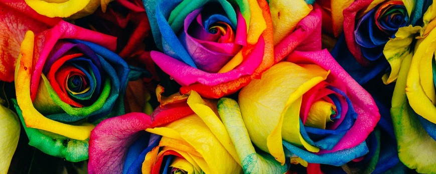 LA ROSE MULTICOLORE